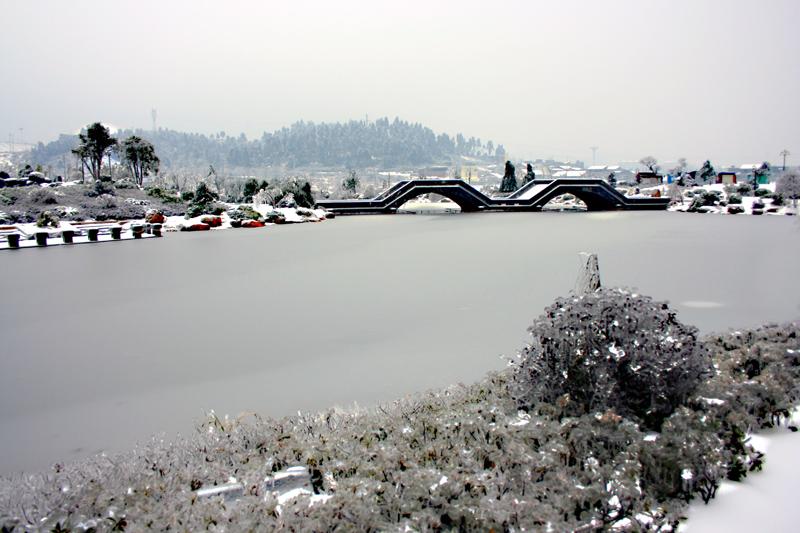 [原创]冰雪覆盖着爱莲湖—— 冰灾记忆之七 - 歪树 - 歪树