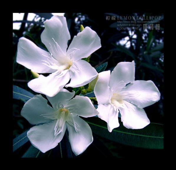 【原创】_花花草草 - 柠檬棒棒糖 - 柠檬棒棒糖的田园