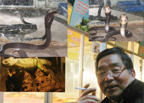 变色龙与蟒蛇 - 娄季初 - 娄季初诗词文集
