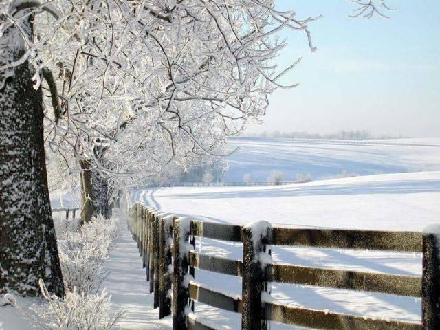 【原创现代诗歌】冬的本色 - 枫叶 - 枫叶的博客