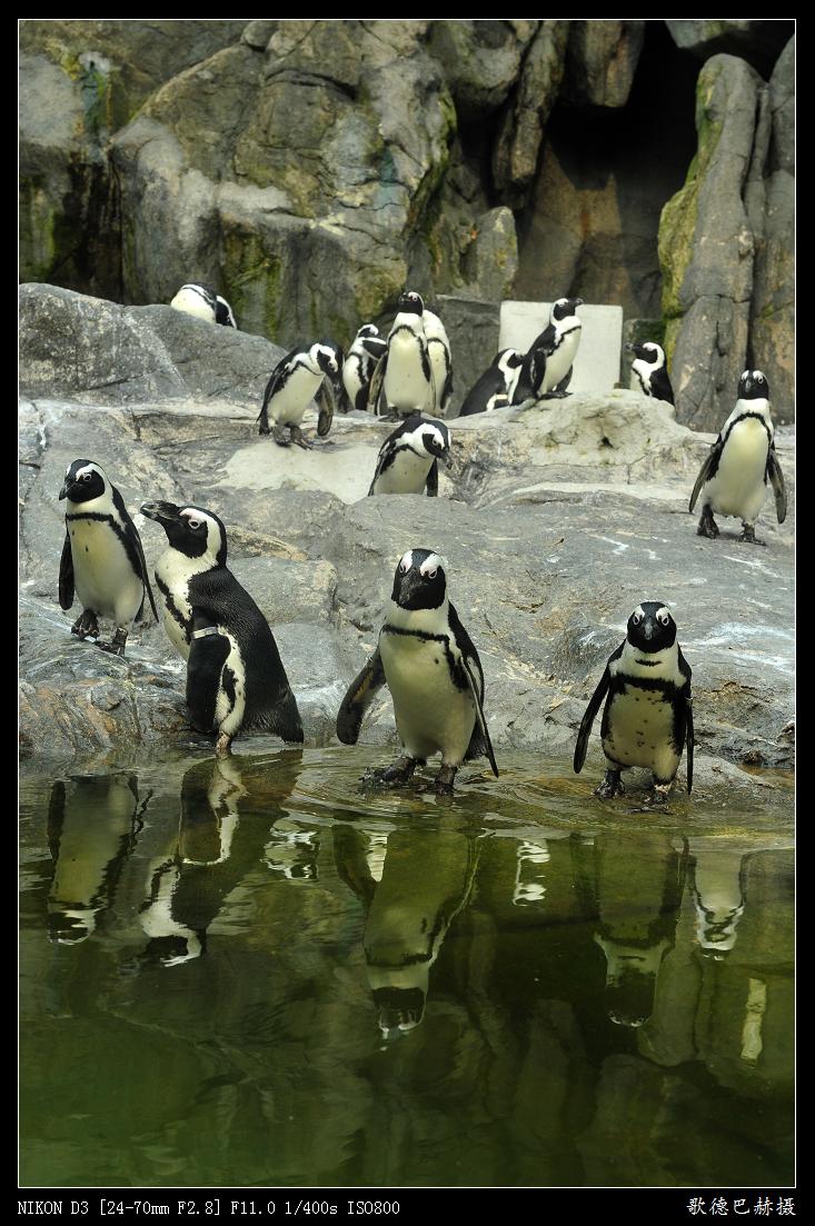 【转载】企鹅---原创 - 金砳 - 金砳