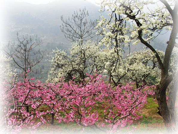 (原创)春到山乡 - 高山长风 - 亚夫旅游摄影博客