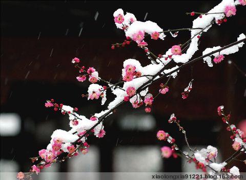 【东东原创】七绝·暖冬思梅 - 什么东东 - 什么东东