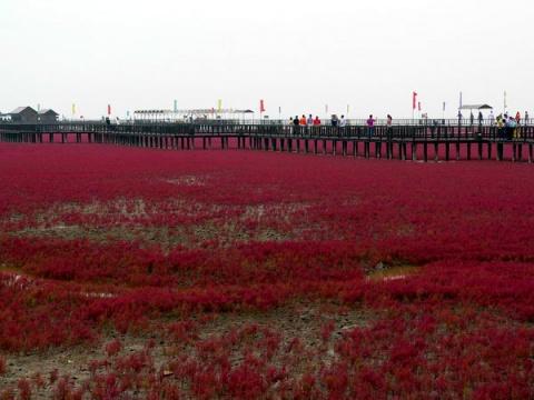 [原创]相见红海滩(2007.8.12) - 风动 - 风动的博客