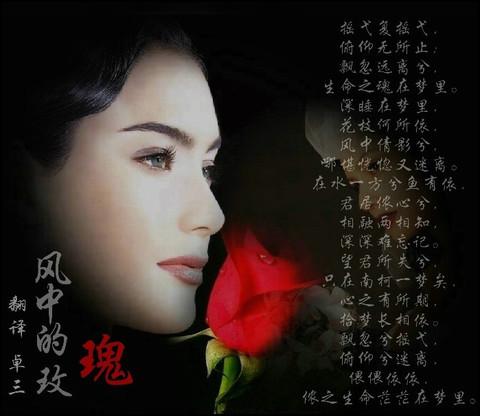 风中玫瑰(引用) - lclyq2008 - lclyq2008的博客