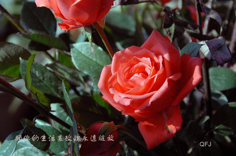 送给朋友的祝愿 - qfjun2010 - qfjun2010的博客