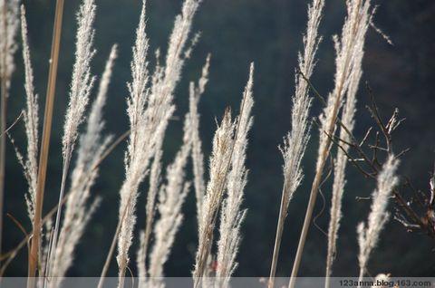 2008年12月30日 - 123anna - 冰凌小语