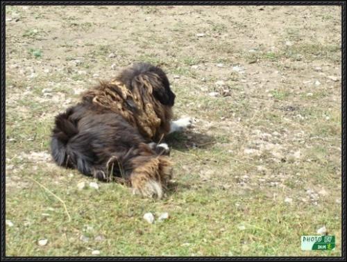 自驾进藏12:沿途的那些动物们 - 刘兴亮 - 刘兴亮的IT老巢