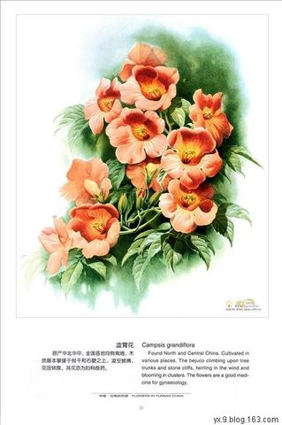 手绘百草图之三(20P) - 佛心无限 - .