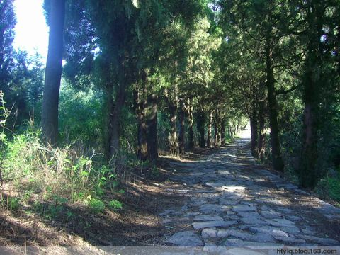 风景优美的夏天林间小路