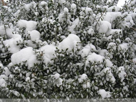 (原)冬至到·大雪飘 - milaoyan - milaoyan的博客