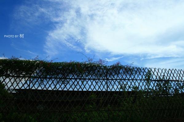 【山有扶苏,隰有荷华】摄影专集第一集 - 彷徨中晕眩 - 永不褪色的只有黑色