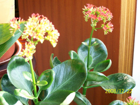 常见观赏植物(一) - 黑白 - 黑白的博客