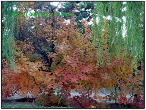 【原创图片】十三陵-神路(2007.11) - 珠峰 - 珠峰博客