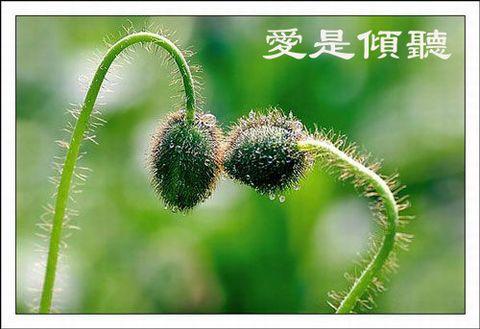 爱是永恆的盼望 - 玫瑰小手 - 陶然亭