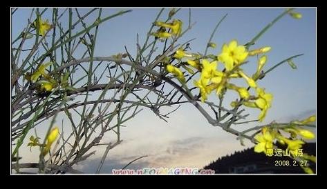 立春 - 思远山 - 思远山
