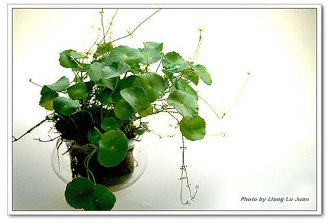 [原创]一个美丽的环保立体小花园梦 - 斯金 - 海纳百涓