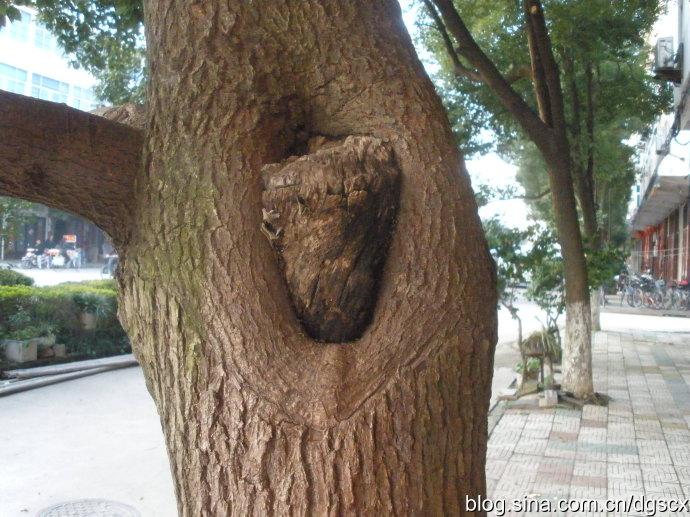 (唐昱融)家门口的那棵树 - 成长中的EF - 青春年少,书香满怀