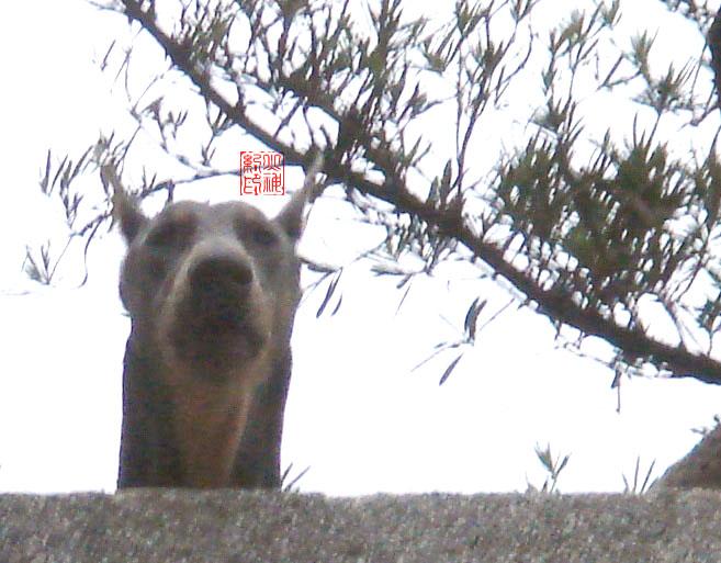 【JOEY】图志之居高临下 - 火神纪 - 低低调地绽放糜烂