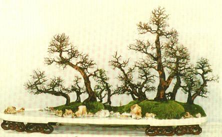 中国盆景艺术 - 飘  逸 - 飘---逸
