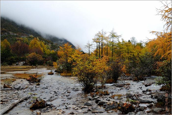 [原创]木格错——溪水和湖 - 迁徙的鸟 - 迁徙鸟儿的湿地
