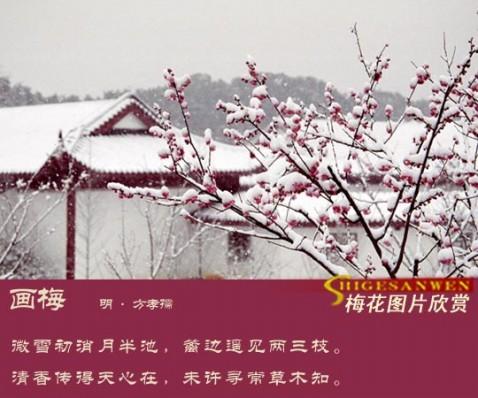 赏    梅 - 静远堂 - 静远堂  JING YUAN TANG