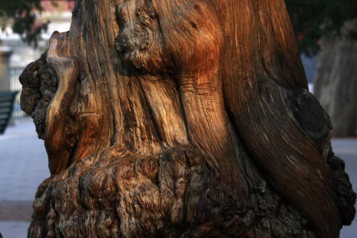 (原创摄影)夕阳下的古树 - 刘炜大老虎 - liuwei77997的博客