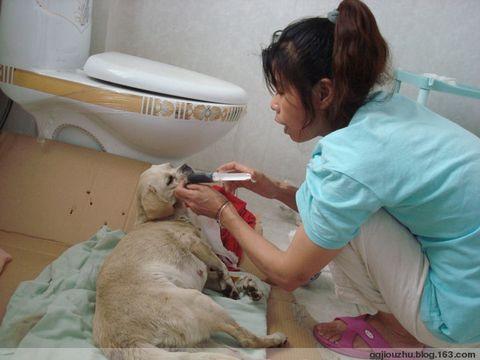 """纪念""""5.12""""大地震一位伟大的母亲——英雄狗妈妈 - 广元市博爱动物保护中心 - 广元市博爱动物保护中心"""