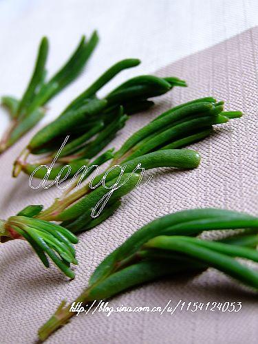 碱蓬,当下热卖的野菜---碱蓬煎饺和蒸饺 - 可可西里 - 可可西里