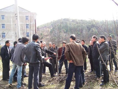 举办梨树冬季修剪培训会 - 清扬 - 花果飘香