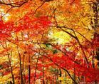 【原创】秋日寄空谷幽兰 - 于蓝 - 于蓝的博客