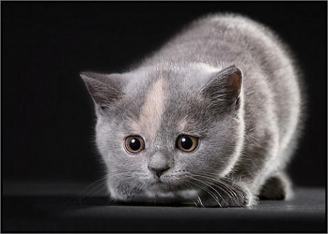 ★人间精灵小猫眯「组图」 - 博览天下美女 - 漂亮美眉