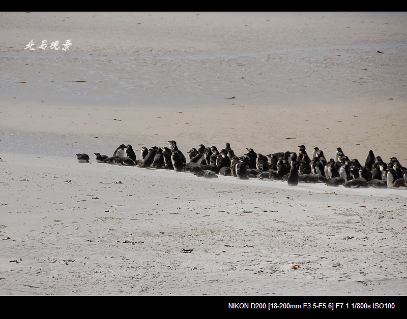 啊,南极(八) - 西樱 - 走马观景