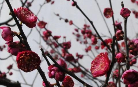 """""""春天从梅园开始""""——探梅小记 - csshen523 - 我的博客"""