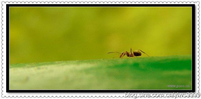 《蚂蚁哲学》