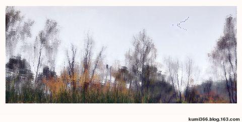 荷塘里的鱼 - kumi366 - kumi366的博客