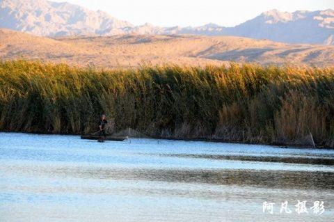 博斯腾湖--莲花湖、阿洪口之芦苇荡、野鸭 - 阿凡提 - 阿凡提的新疆生活