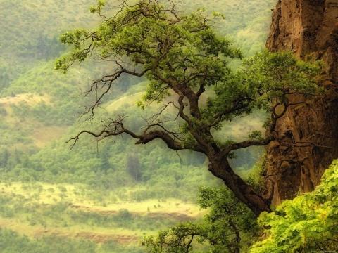 秀美的大自然(图音) - aaa369aaa369的日志 - 网
