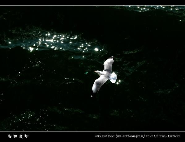[原创]洱海拾拍海鸥 - 海狮 - 大连海狮的博客