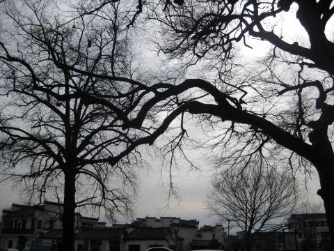 2009年1月29日 - 木子 - 听海哭的声音
