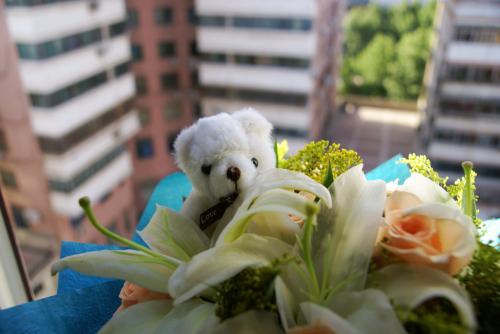 今天的主题是熊 - 夏笳 - 夏天的茄子园