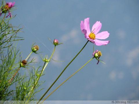 诵经紫竹林 - 梅儿 - 梅儿家园