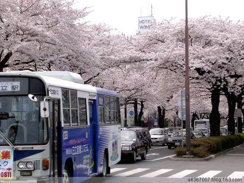 [美图] 一条路 绽红泻绿——50张春意盎然的桌面 - 路人@行者 - 路人@行者