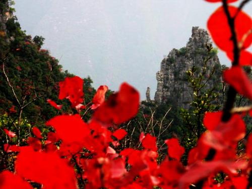 三峡红叶似彩霞 - 踏雪寻梅 - 李新月3186的博客
