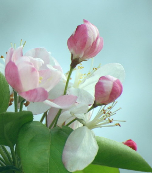 ◆《返乡》 - lygqihongling - 清荷铃子