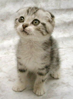 被可爱的猫咪萌到了 - 芝士蛋糕 - 回家的足迹