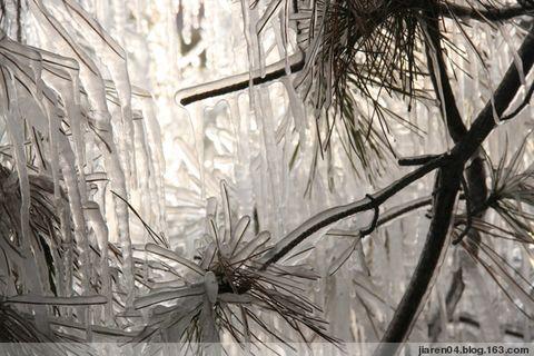 春雪【原创】 - 逆光中的风景 - 沉思 飘逸在月色中