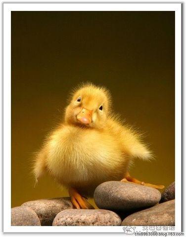 【搜集整理】动物的美丽瞬间 心灵的眼睛窗户 - 陈迅工 - 杂家文苑
