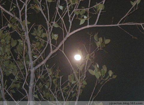 仍是那轮明月(图) - 温柔的月色 - Cactus的博客