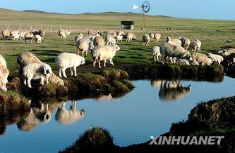 管理科学经典定律——《羊群效应》